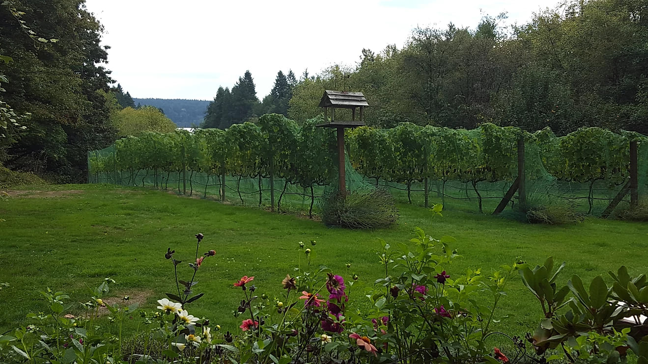 Back vineyard